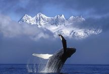 Whale Yes! / Collection of Whales