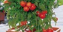 Herbs & Vegetables