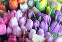 Really Pretty Flowers
