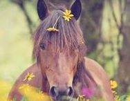 Horses of Spring / The best of horses in spring time