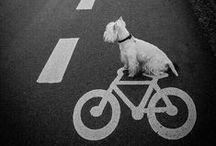 Quotes en Fun / Leuke, inspirerende en grappige quotes/plaatjes over fietsen.