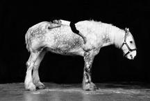 equine / Horses