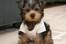 Too Frickin Cute!