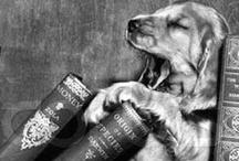 dawgs / by Lizzie Sansing