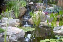 Ponds and Water Gardens / Nothing takes center stage in the landscape quite like a pond or water garden. The beauty of a low-maintenance pond will be enjoyed by family and friends for many, many years. Learn more about the pond lifestyle at www.aquascapeinc.com.  / by Aquascape Inc