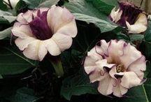 Garden: Varieties to Try / Varieties to swoon over / by Stasha Switzer