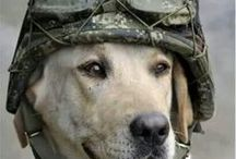 Hero Dogs & Cats & Working Animals / Some animals actually work (not mine) but some.