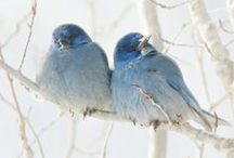 """Birds / I've never been able to have a bird pet because of the overwhelming feline presence in my house. Didn't want  them to end up as between meal """"snacks"""". But they are beautiful."""