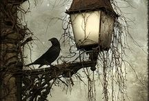 Black Ravens and Bird-Inspired / by WebSpinstress