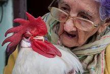 Fowl Friends
