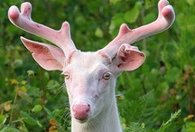 Mythic Animals