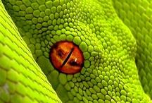 Reptilian & Amphibian Beauty
