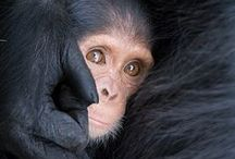 Monkey Lover