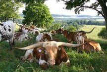 Texas, Our Texas! / by 22gardenstreet