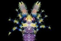 Starfish & Crustacean