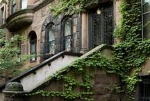 Ivy League / The beauty of ivy in all forms