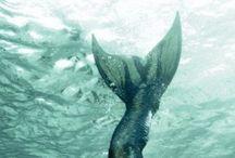 Mermaid / by Abigail Daffinson