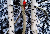 winter / by Haley Maddox