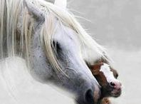 Joyous Love of Horses / Horses, horses and more horses!