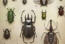 Insects and other Arthropods / Cool arthropods of all kinds. / by Emily Linkous