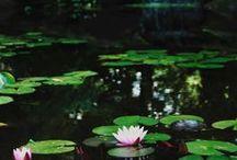 Jardins et horticulture | Gardens