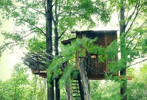 Treehouse Ideas / I'm going to build the treehouse I've wanted since I was four.