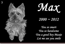 In Memory Of My Yorkie Max~Dog's Love / My 12 year old beloved yorkie Max went to doggie Heaven on August 20, 2012. We miss him tremendously! / by Maria Harris-James