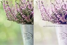 PhotoShop ∫ FREEBEES / by Xammes fotografie