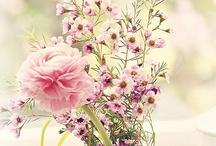 S P R I N G. / Spring