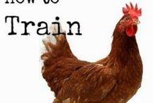 Homesteading - Chickens