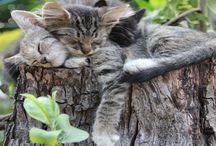 Cute 4 Legged friends / by Andrea Hatkewicz