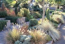 xeriscape / xeriscape, cacti, low water landscape ideas