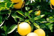 Grapefruit by Havana Home / Sun-kissed grapefruit will whisk you away to Spain in a heartbeat. With a hint of orange and tangerine this fragrance will soon become a favourite