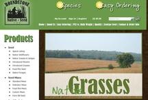 Online Store Websites / by TWG Design