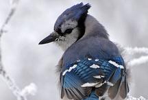 Nature - Birds & Animals / by Jeannie Keener