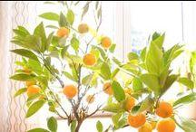 :: garden