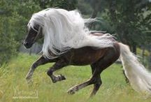 Horses / God made this beautiful animals for us to enjoy and to look after ♥♥♥ I Love them ♥♥♥ / by Magda van Niekerk