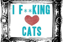 Kitties / by Meryl Gallagher King