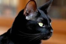 """=^..^=  """"Blacky,""""  is my favourite kitty  =^..^= / I love my black beauty with all my heart ♥ / by Magda van Niekerk"""