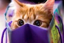 Cats love Boxes / All kitties love their boxes ♥ / by Magda van Niekerk