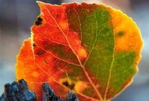 LEAVES / The most beautiful leaves in all colors, shapes and sizes. / by Magda van Niekerk