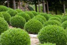 Garden - What I'm Growing / by Ryann Laden