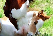 Motherhood with animals. / by Magda van Niekerk