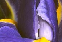 Flowers / by Lisa Hinton