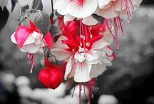 Flowers & Garden