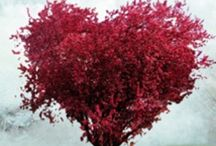 Valentines Day / Love......... / by Phyllis Ranger