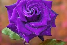 Purple, my favorite color / What can I say - purple has always been my favorite color! / by Phyllis Ranger