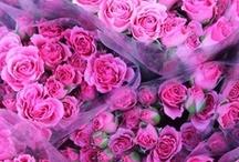 Blooms / by Michelle Reeder