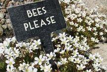 Bees / by Linda Barton