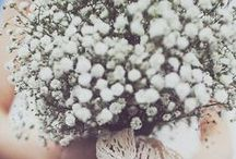 Gypsophila Bouquets / A selection of gorgeous wedding bouquets made from gypsophila.